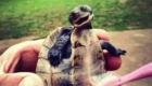 carinho_tartaruga