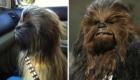 É um cão ou estou vendo o Chewbacca, personagem de Star Wars?