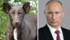 Esse daí é a cara do Vladimir Putin, presidente da Rússia.