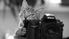 gato_Fotografo