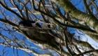gatos-camuflagem-arvore