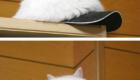 gatos-camuflagem-bone