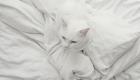 gatos-camuflagem-cama
