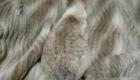 gatos-camuflagem-cobertor