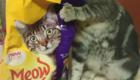 gatos-camuflagem-comida
