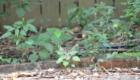 gatos-camuflagem-folhas