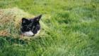 gatos-camuflagem-grama