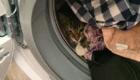 gatos-camuflagem-lavar