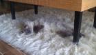 gatos-camuflagem-mesa