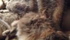 gatos-camuflagem-pelo