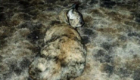gatos-camuflagem-pisos