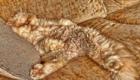 gatos-camuflagem-poltrona