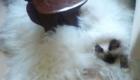 gatos-camuflagem-tapete