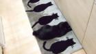 gatos-camuflagem-tapetes