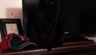 gatos-camuflagem-tv
