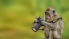 macaco_camera