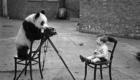panda_fotografo