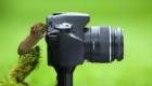 ratinho_camera