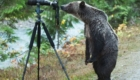 urso_olhando