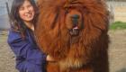 Quase um leão com essa juba!