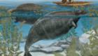 Dugongo de Steller: Mais uma vez, a ação dos colonizadores, que apreciavam a carne saída deste mamífero, levou à sua extinção em 1768. Habitava o mar de Bering, uma extensão do Oceano Pacífico.