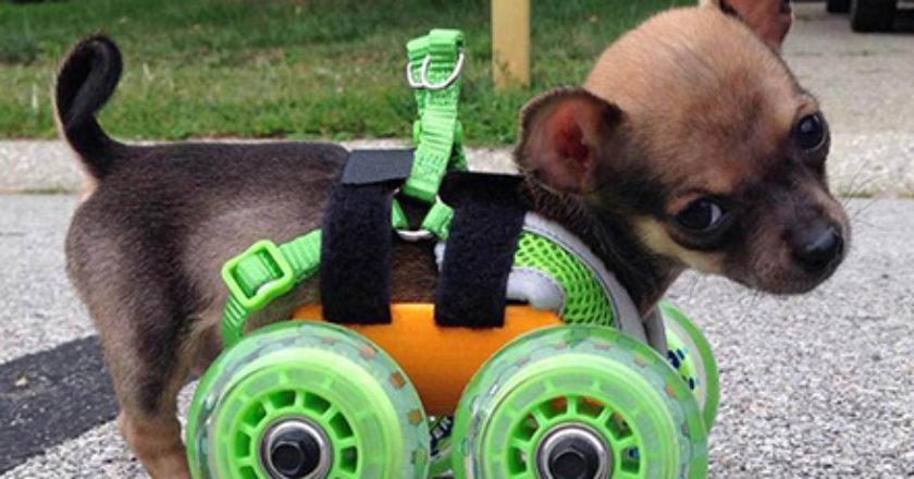 TurboRoo com cadeira de rodas acoplada ao corpo.