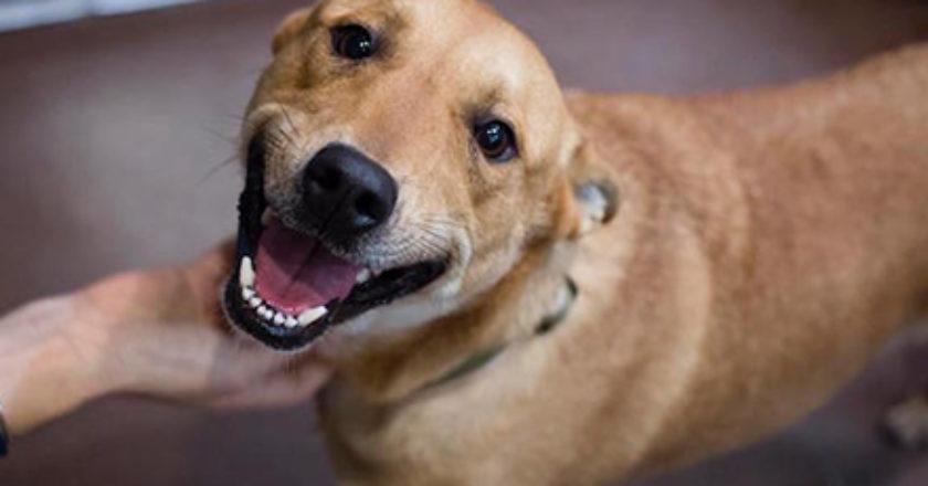 (Reprodução/Facebook Badass Brooklyn Animal Rescue