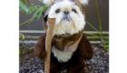 Um Ewok fofo demais!