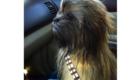 Um Chewbacca muito realista