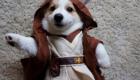 Intimidador Jedi