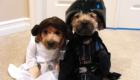 Leia e Vader: um casal inusitado