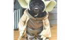 Yoda e sua sabedoria
