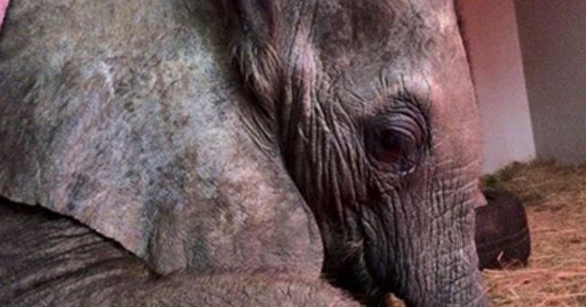 Foto: Rhino Orphanage