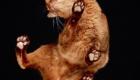 Gatos e suas patas fofinhas.