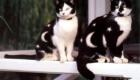Pessoas teriam supostamente pago fortunas para terem seus gatos pintados