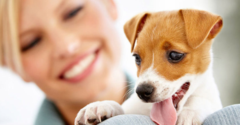Reprodução/Cachorros Fofos