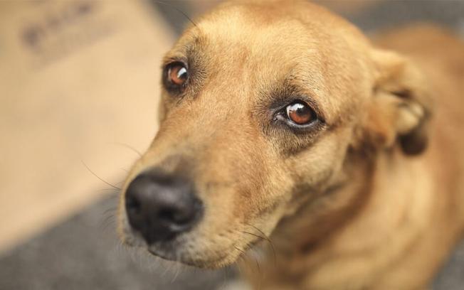 Como denunciar maus-tratos ou abandono de animais de forma anônima?