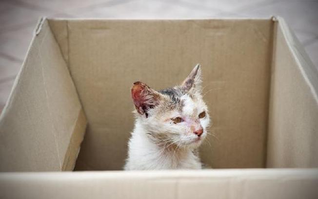 Gatos também sofrem muito com maus-tratos
