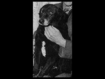 Adjutant - Cão famoso