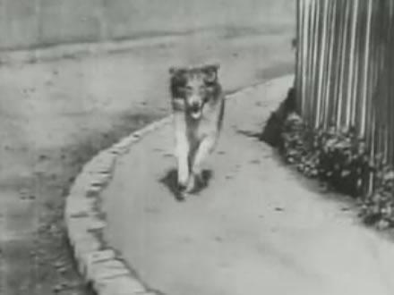 Blair - Cão famoso
