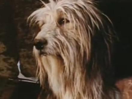 Blood - Cão famoso