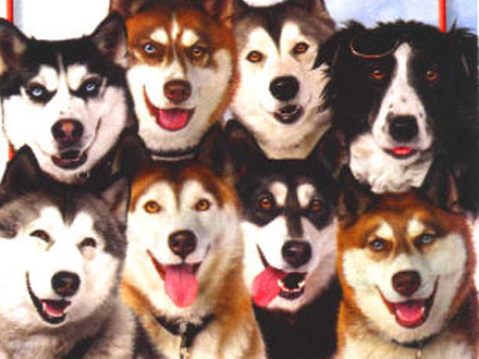 Ducches - Cão famoso