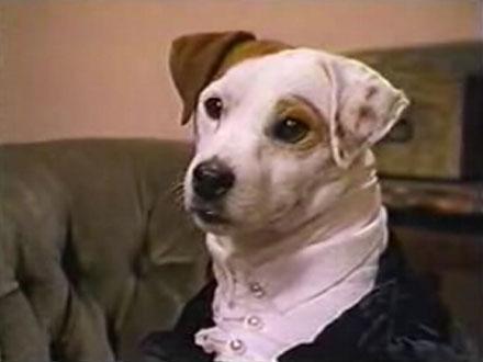 Wishbone - Cão famoso
