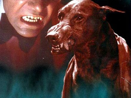 Zoltan - Cão famoso