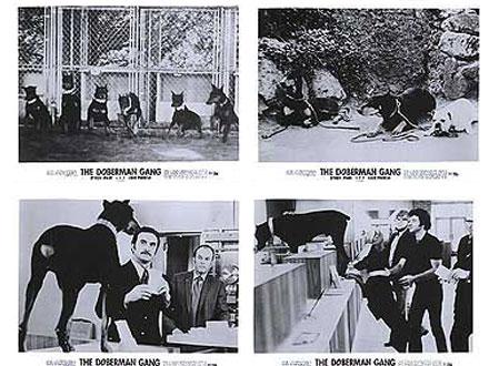 Gangue dos Dobermans - Cão famoso