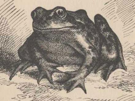 Daniel Webster - Réptil/Anfíbio famoso
