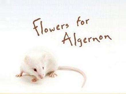 Algernon  - Roedor famoso